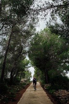 숲에서 일몰에 자전거를 타는 사이클