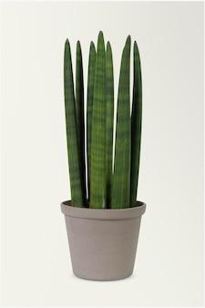 灰色の鍋に円筒形のヘビの植物