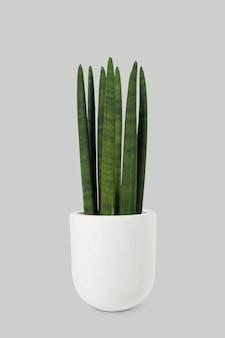 白い鍋に円筒形のヘビの植物