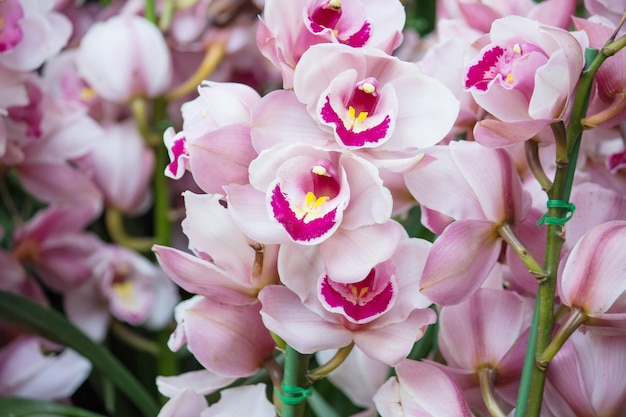 Цветок орхидеи цимбидия