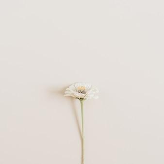 Cynicism flower on beige surface