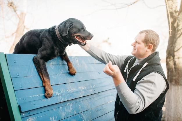 놀이터에서 cynologist 훈련 서비스 개. 순종적인 애완 동물 야외, 블러드 하운드 가축을 가진 주인