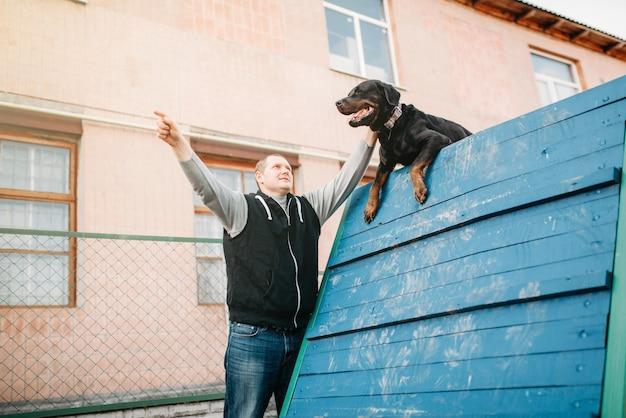 놀이터에서 cynologist 훈련 작업 개. 순종적인 애완 동물 야외, 블러드 하운드 가축을 가진 주인