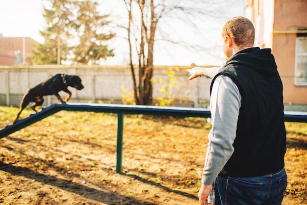 Cynologist는 놀이터에서 균형을 유지하기 위해 개를 훈련시킵니다. 순종적인 애완 동물 야외, 블러드 하운드 가축을 가진 주인