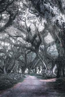 Cypress tree tunnel in east java