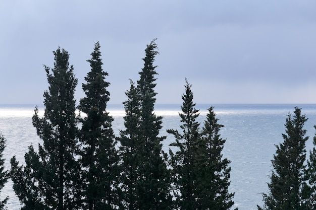 Cypress trees against the background of a cloudy winter sea with a sun spot near the horizon