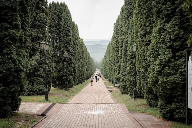 편백나무 골목, 가로수길
