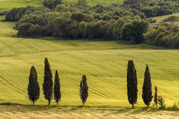 들판 이탈리아의 전형적인 투스카니 시골 질감의 사이프러스 나무 들판과 초원