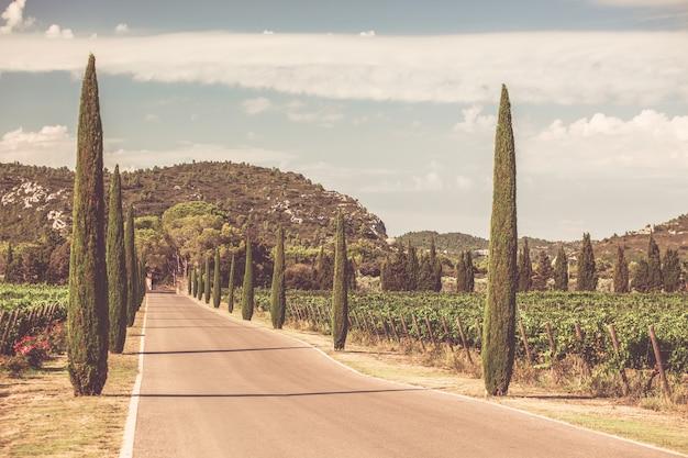 南フランスのブドウ園を通るヒノキの路地