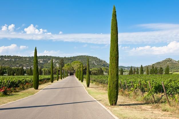 Аллея кипарисов через виноградники на юге франции