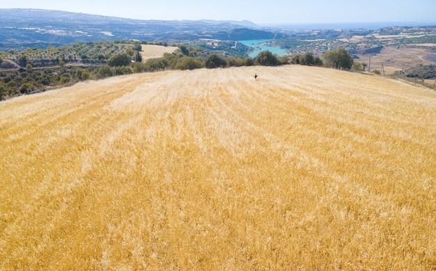 혼합 작물의 농업 분야, 가축 사료가 있는 키프로스 시골 풍경 파노라마