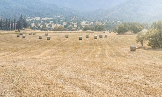 산 배경이 있는 들판에 건초 더미가 있는 키프로스 여름 풍경