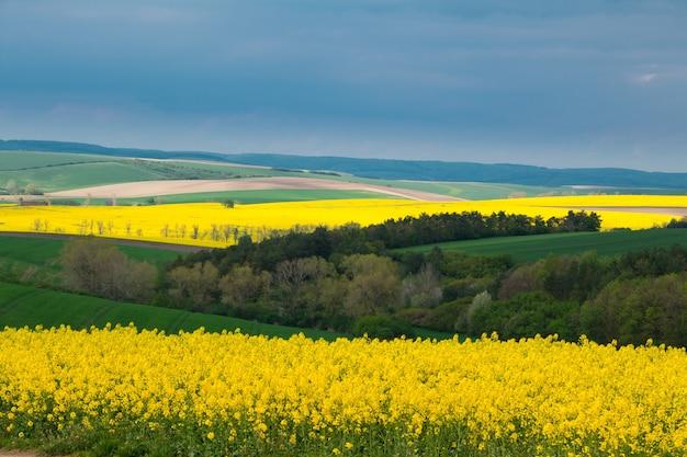チェコ共和国。南モラヴィア。菜の花と緑の小麦の丘陵地帯。曇った不吉な空