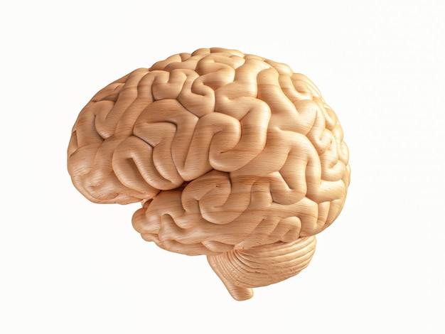 D illustration of human brain made of wood