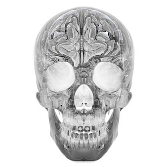 흰색 배경에 고립 된 크리스탈 해골의 d 그림