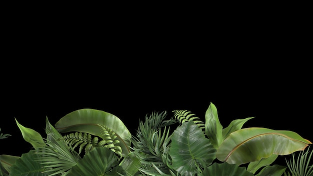 D render composition of tropical plants on a black background