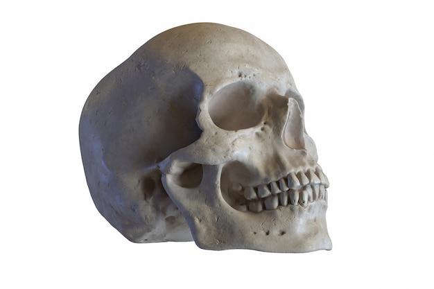 흰색에 고립 된 인간의 두개골의 대리석 조각의 d 렌더링