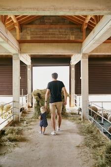 Папа и маленькая девочка гуляют по ферме мимо заборов для овец