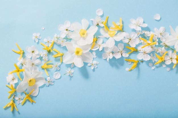 Нарциссы и вишневые цветы на синем фоне