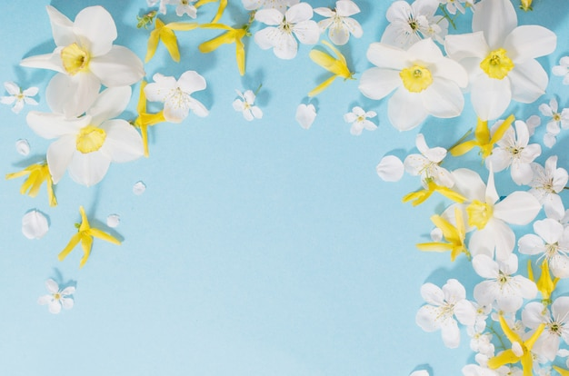 Daffodils and cherry flowers on blue surface background