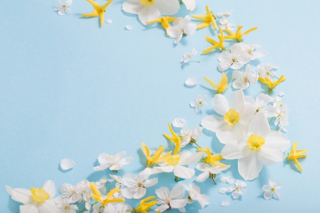 Daffodils and cherry flowers on blue surface
