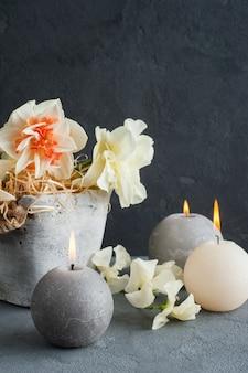 Daffodils in flower pot on dark concrete