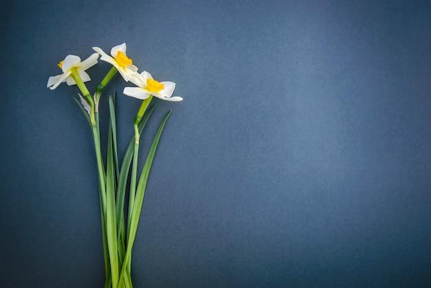 Нарциссы на на синем фоне серого