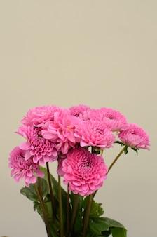 Dahlia flower for background