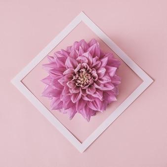 ポスターやポストカード用のモダンな白いフレームのダリアの花。パステルカラーのコンテンポラリーカラー。