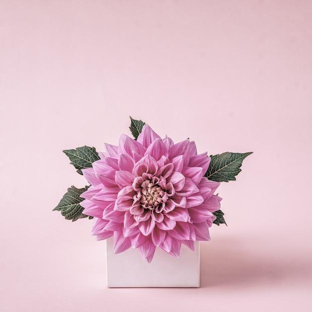 挨拶とおめでとうのためのモダンな創造的なグリーティングカードのダリアの花。パステルカラー。