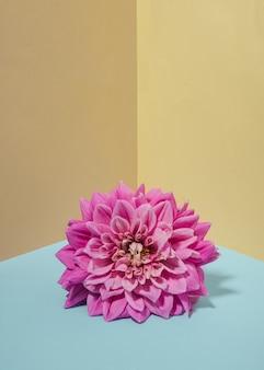 白樺の背景のクローズアップにダリアの花。最小限の花のコンセプト。フラットレイ。