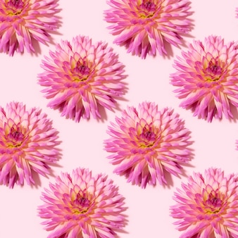 Dahlia flowers pattern on pink background
