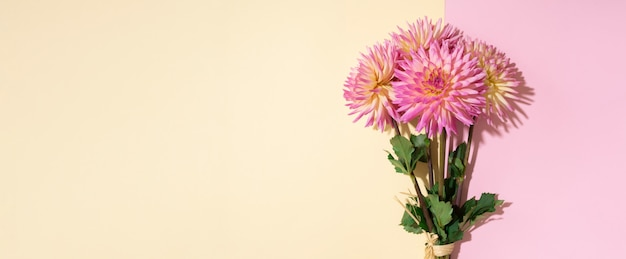 Dahlia flowers on pink and yellow background