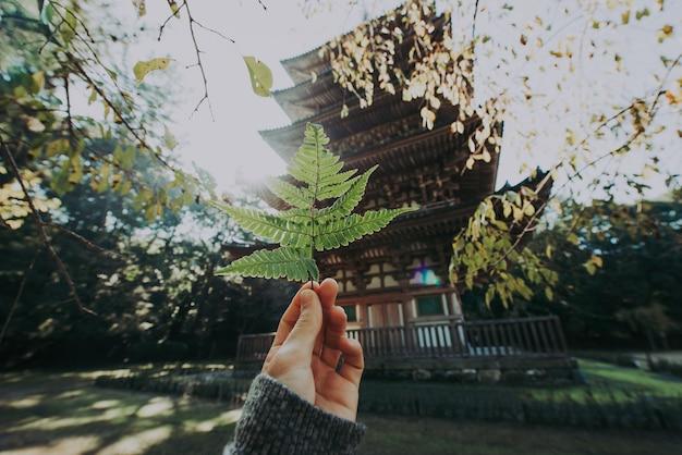 Храм daigoji в киото, япония