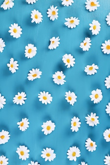 Daisies on a blue background. top view. summer background