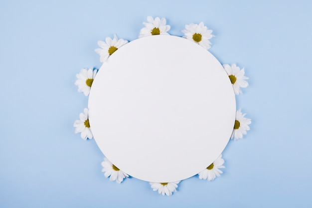 Daisies flowers in a circular shape