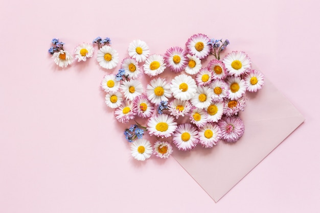Daisies and forget-me-nots in a pink envelope on a pink paper background.