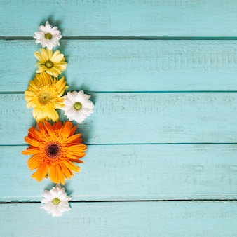 Daisies and gerberas on blue wood