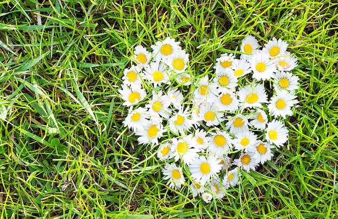 ромашки сердце на зеленой траве