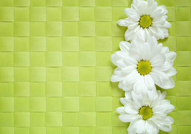 Daisies line on green checkered tablecloth, flat lay