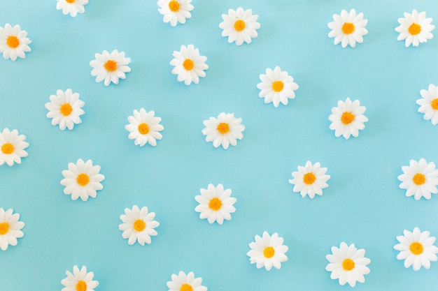 Daisies pattern on blue background