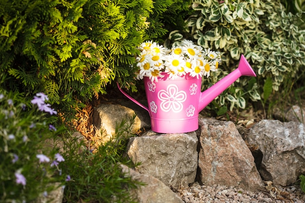 Daisies in a rustic watering can on rock garden