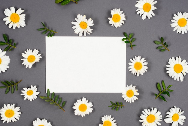 Daisies scattered around frame
