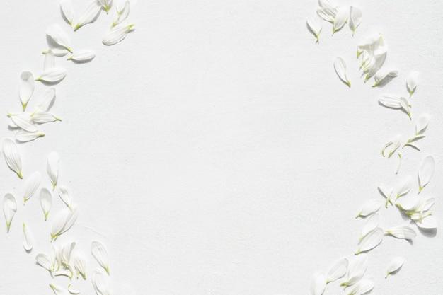 白い背景の上のデイジーの花。