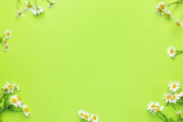 コピースペースと緑の背景にデイジーカモミールの花