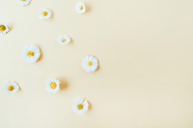 Бутоны ромашки ромашки на пастели