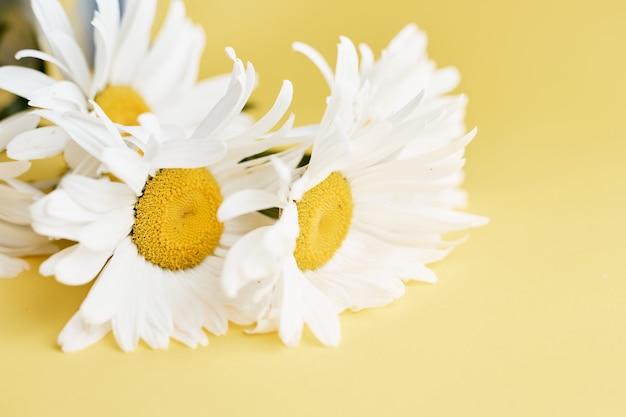 Цветок ромашки на желтой поверхности