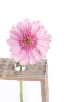 Daisy flower in test tubes