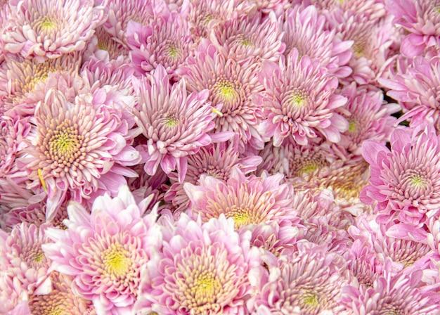 デイジーの花のテクスチャ