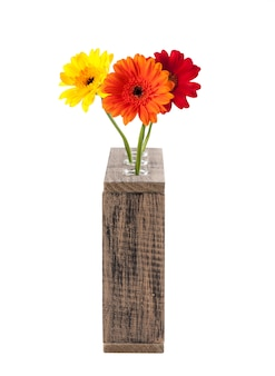 Daisy flowers in test tubes